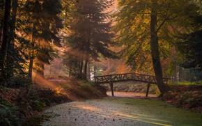 Обои осень, лес, солнце, лучи, свет, ветки, мост, туман, парк, стволы, растительность, листва, утро, ели, речка, ...