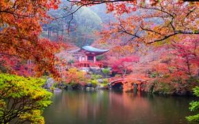 Обои парк, мост, лестница, красочно, деревья, кусты, Япония, Киото, листья, пагода, пруд, ветки, осень, камни
