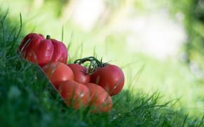 Картинка трава, природа, перец, овощи, томат