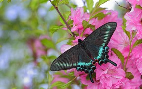 Картинка цветы, бабочка, крылья, красавица
