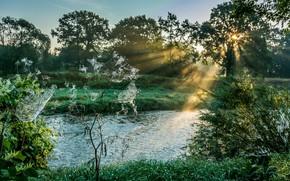 Картинка трава, паутина, утро, луг