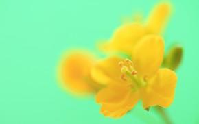 Картинка цветок, фон, лепестки