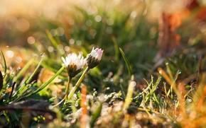 Картинка лето, трава, солнце, капли, цветы, роса, блики, боке