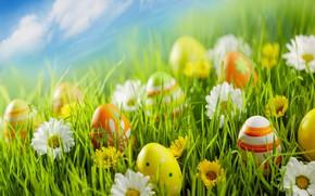 Картинка цветы, праздник, яйца, пасха, травка