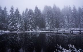 Картинка зима, лес, снег, отражения, деревья, мост, туман, озеро, ели