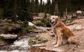 Обои собака, природа, друг