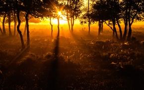 Картинка солнце, деревья, Нидерланды, Солнечные лучи, Утренний свет, Morning light