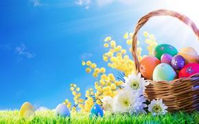 Картинка трава, солнце, цветы, корзина, весна, Пасха, flowers, spring, Easter, eggs, decoration, Happy, яйца крашеные
