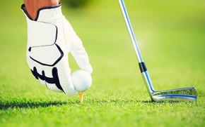 Картинка grass, golf, ball, gloves