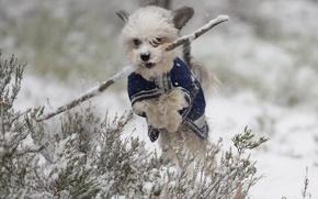 Картинка зима, снег, прыжок, собака, прогулка, палка, пёсик