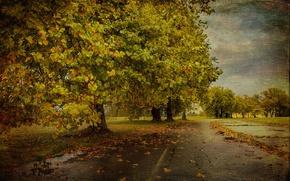 Картинка дорога, осень, дерево, текстура