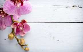 Картинка wood, орхидея, pink, flowers, orchid