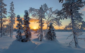 Картинка зима, солнце, лучи, снег, деревья, пейзаж, закат, природа, сугробы
