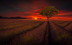 Картинка поле, небо, дерево, красота