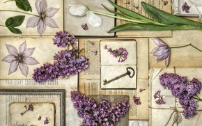 Картинка книги, тюльпан, ключ, винтаж, сирень, клематис, гербарий