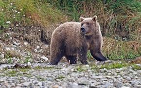 Картинка природа, камни, бурый медведь, млекопитающее