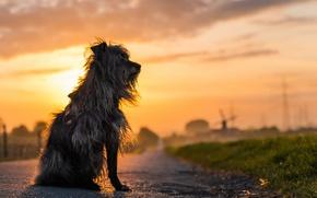 Картинка дорога, закат, собака
