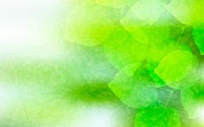 Обои листья, зеленый, фон