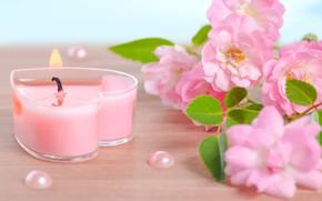 Картинка flowers, Spa, background, спа, candles, spa stones
