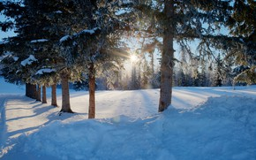 Картинка зима, дорога, лес, солнце, снег, деревья, сугробы