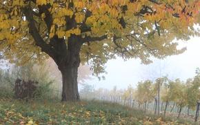Картинка Осень, Деревья, Fall, Листва, Виноградник, Autumn, Colors, November, Trees, Leaves, Ноябрь, Vineyard