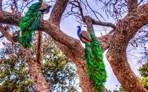 Картинка деревья, птицы, яркие, HDR, разноцветные, павлины