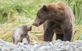 Картинка трава, природа, малыш, медведи, мама