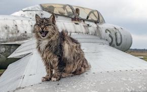Картинка кошка, фон, самолёт