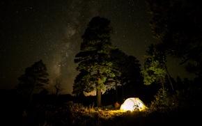 Картинка лес, небо, свет, деревья, ночь, звёзды, Млечный путь, палатка, кустарники