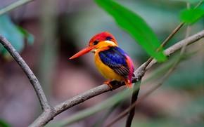 Обои листья, зимородок, птичка, природа, птица, ветка, боке