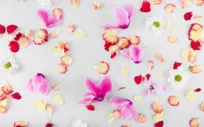 Картинка цветы, лепестки, flower, petals