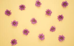 Картинка цветы, petals, decoration, purple daisies