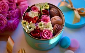Обои цветы, коробка, подарок, розы, макаруны