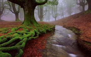Картинка осень, деревья, природа, ручей, Spain, Basque country