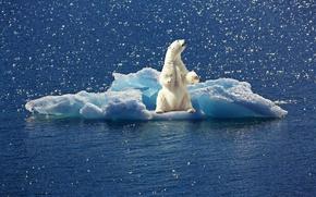 Картинка вода, льдина, белый медведь, полярный медведь