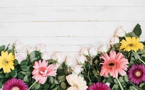Картинка цветы, розы, лепестки, герберы
