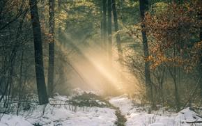 Картинка зима, дорога, лес, свет, снег, деревья, Нидерланды, солнечные лучи, Netherlands, Гелдерланд, Gelderland, Garderen, Гардерен