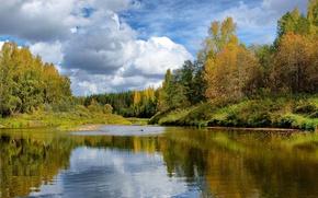 Картинка осень, лес, природа, лесная речка
