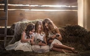 Обои волосы, девочки, сено, котята, подружки