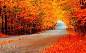 Обои листья, осень, деревья, дорога