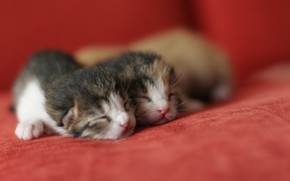 Картинка пара, малыши, котики