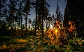Картинка лес, цветы, рассвет, утро