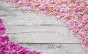Картинка фон, ромашки, текстура, лепестки, rose, wood, pink, marguerite, Tachinska Marina
