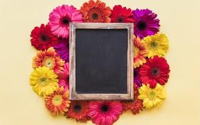Картинка цветы, рамка, хризантемы, wood, flowers, spring, bright
