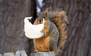 Картинка природа, белка, хлеб