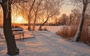 Обои следы, деревья, солнце, скамейка, зима, снег
