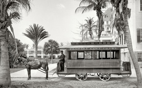 Картинка ретро, пальма, Флорида, США, 1903-й год, конка