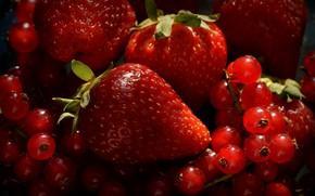 Картинка ягоды, клубника, смородина