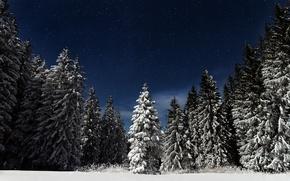 Обои лес, небо, звезды, снег, ночь, природа