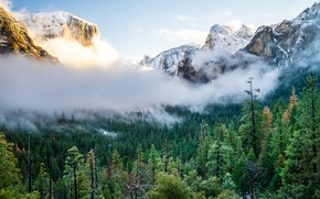 Картинка деревья, горы, туман, Природа